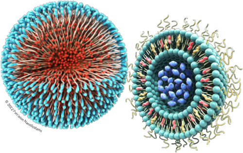 Polymeric Nanoparticle & Liposome