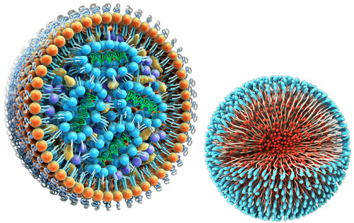 Lipid Nanoparticle and Polymeric Nanoparticle